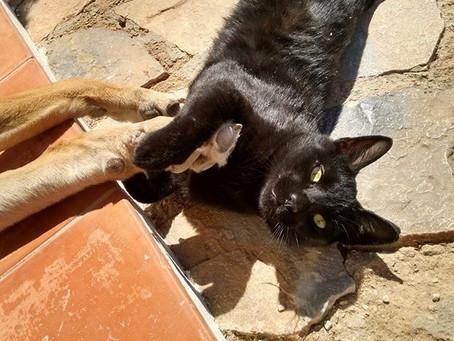 Mi gato es negro y tullido, pero un fuera de serie.