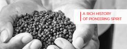 Pepper_web banner-01.jpg