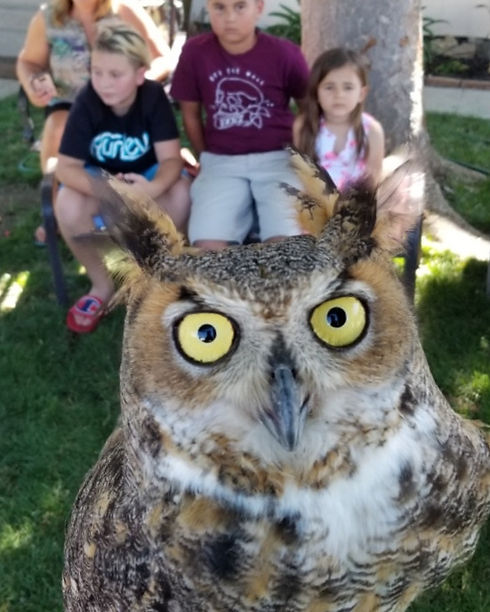 owl selfie_edited_edited.jpg