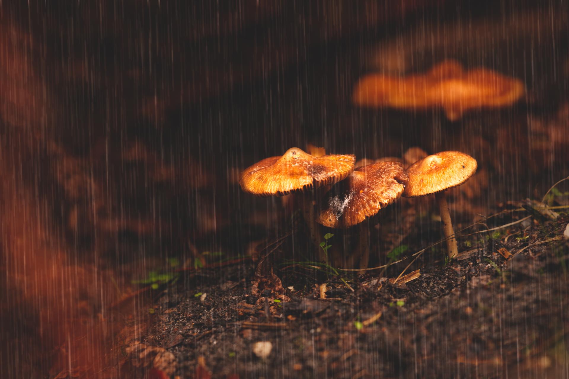 Couleur d'automne_18