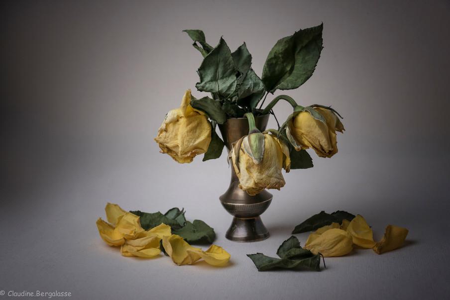 Claudine Bergalasse- Roses