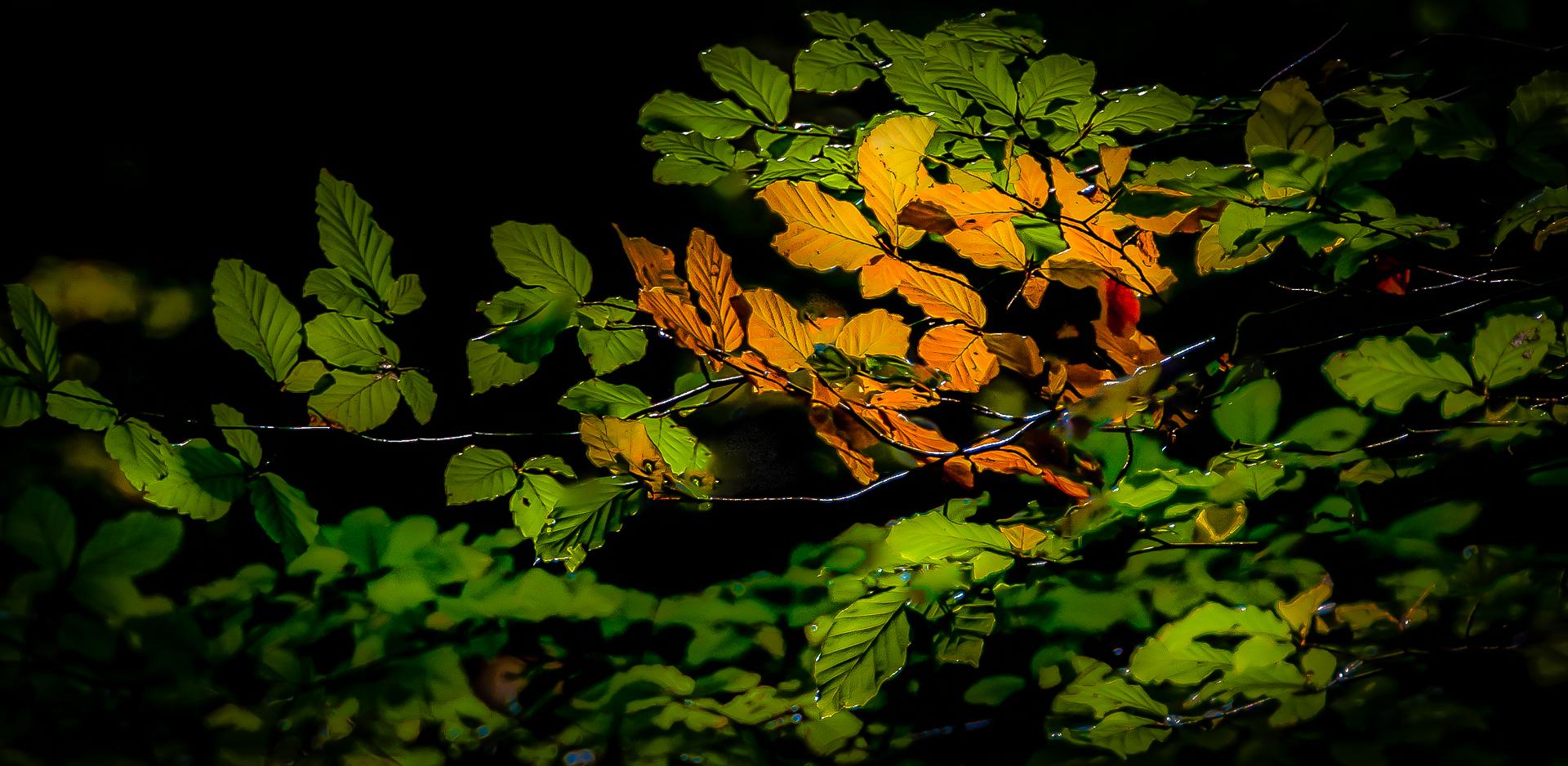 Couleur d'automne_14