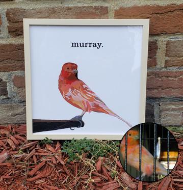 """""""murray"""""""