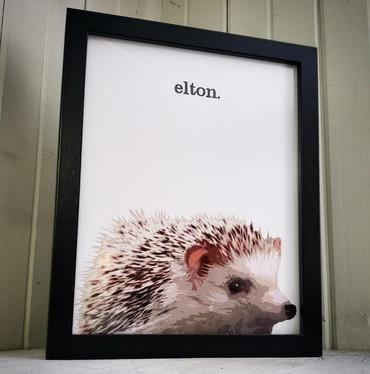 """""""elton"""""""