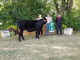 cow show perth fair.jpg
