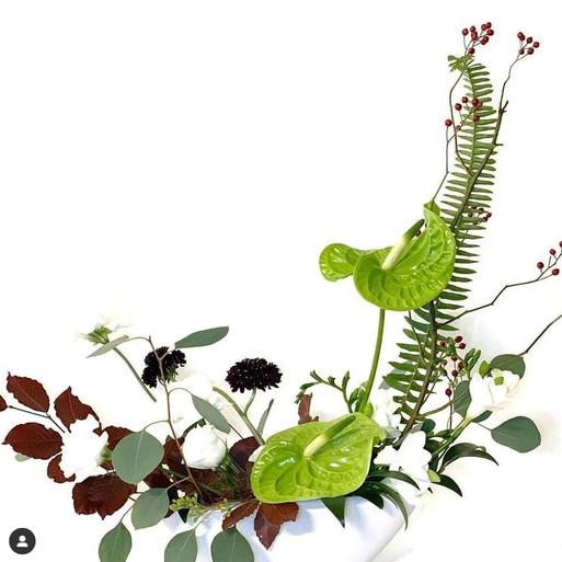 Anthurium Green Godess
