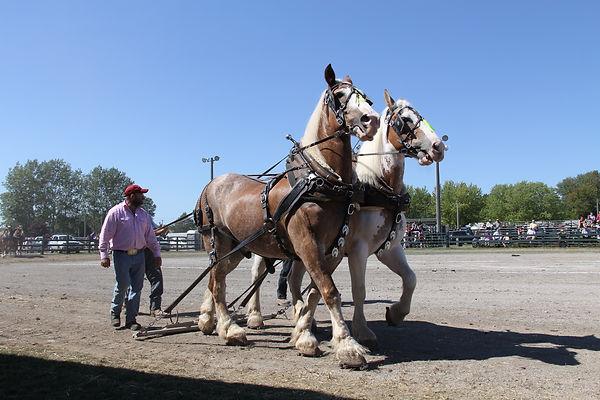 Heavy Horse 2.jpg