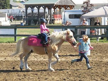 Miniature Horses.jpg