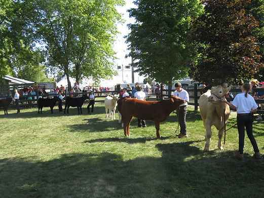 Cattle Show Rules.jpg