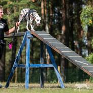 K9 Biathlon_-185.jpg