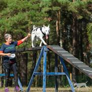 K9 Biathlon_-179.jpg