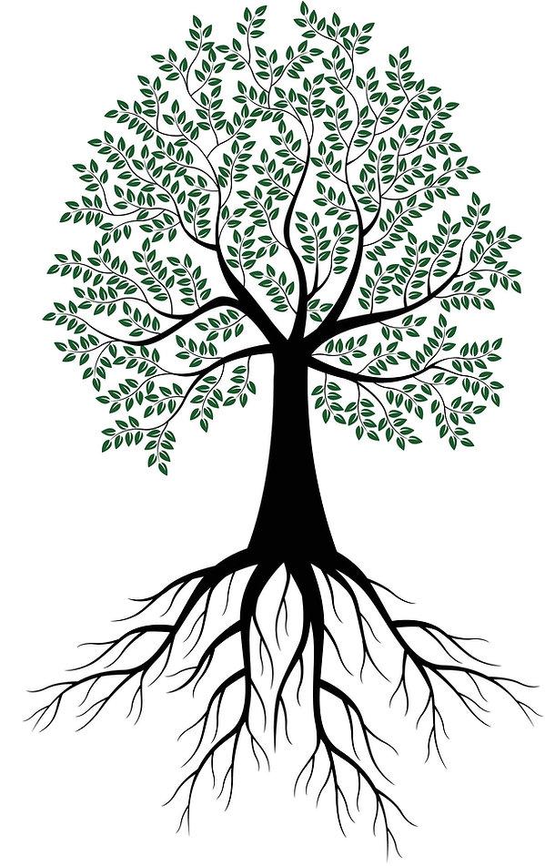 gg67841246_tree for website.jpg