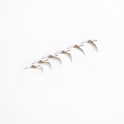 Vogels2 kl.jpg