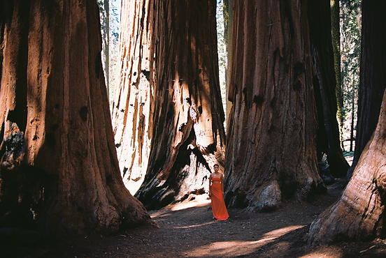 Untitled (Standing With the Sequoias)