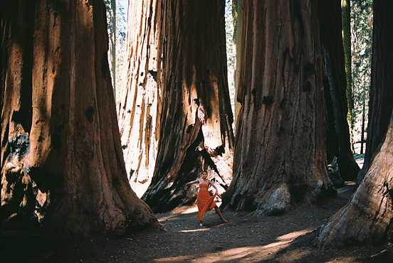 Untitled (Dancing With the Sequoias) Ciarra K.Walters