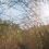 Thumbnail: BEFORE SUNSET