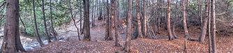 pano woods.jpg