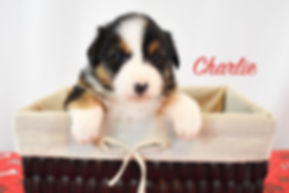 Charlie 1.jpg