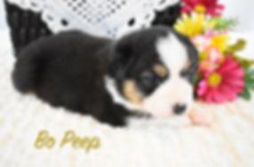 Bo Peep 1.jpg