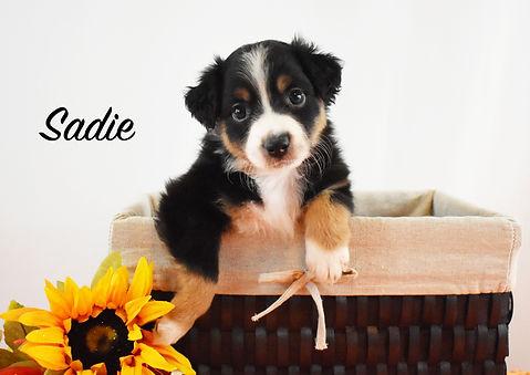 Sadie 1.jpg