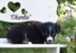 6W Charlie.jpg