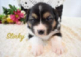 Slinky 1.jpg