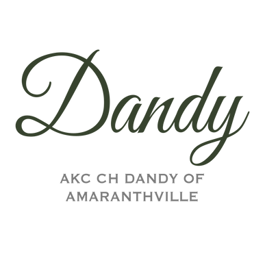 Dandy New Name.png