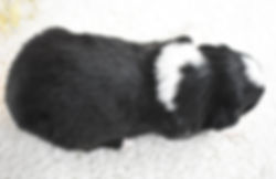 Kristoff 4.jpg