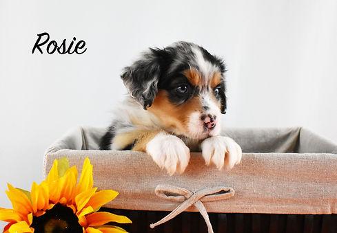 Rosie 1.jpg