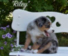 6W Riley 1.jpg
