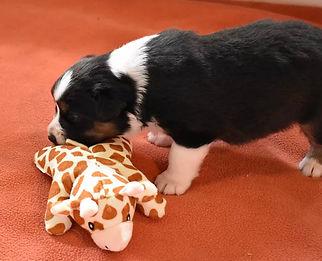 Puppies 4.jpg