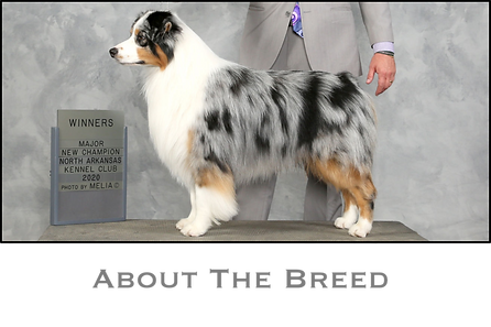 About The Breed Title.png