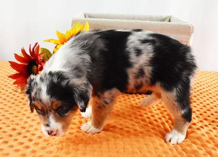 Rosie 4.jpg