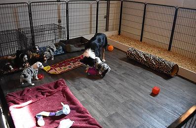Puppies 9.jpg