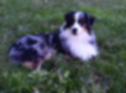 Jasper with Flowers 1.jpg