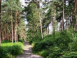 Forêt_d'Ermenonville,_GR_1_près_du_carre