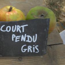Pommier Court pendu gris