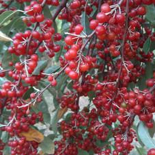 Chalef d'automne rouge