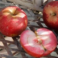 Pomme à chair rose