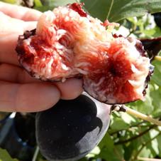 Figue rouge de Bordeaux