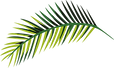 Wailea Beach Villas Resort Nature Leaf