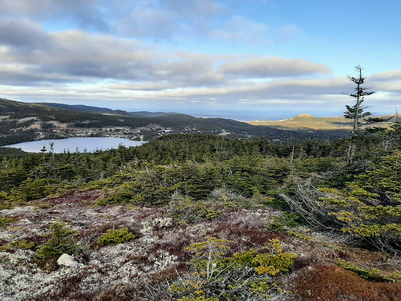 Crow Head Pond Lookout