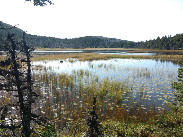 Along the trail to Trout Pond