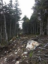 Trail along park boundry