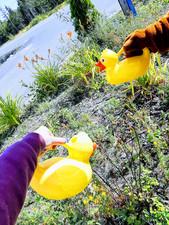 Watering Flowers with Yogi Bear
