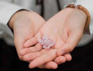 mains fleur de cerisier illustration san
