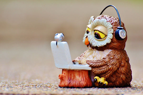 owl-947768_1920.jpg