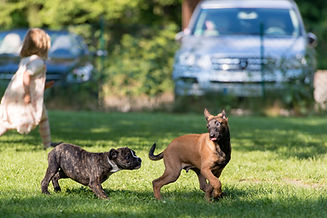 Web_2014 Mensch Hund_012.jpg