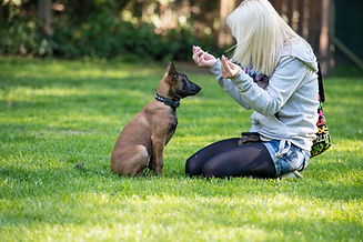 Web_2014 Mensch Hund_029.jpg