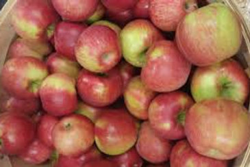APPLES - HONEYCRISP